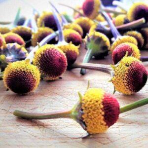 Edible Garden Plants