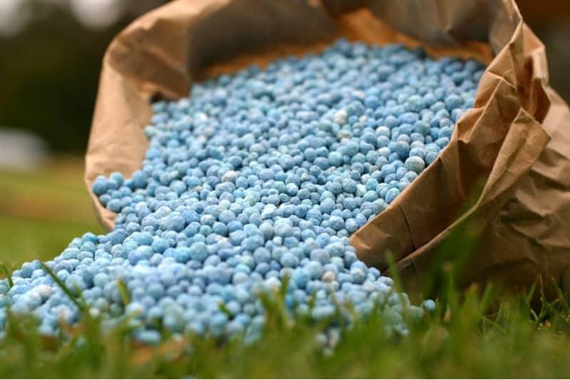 plant fertilizer condition