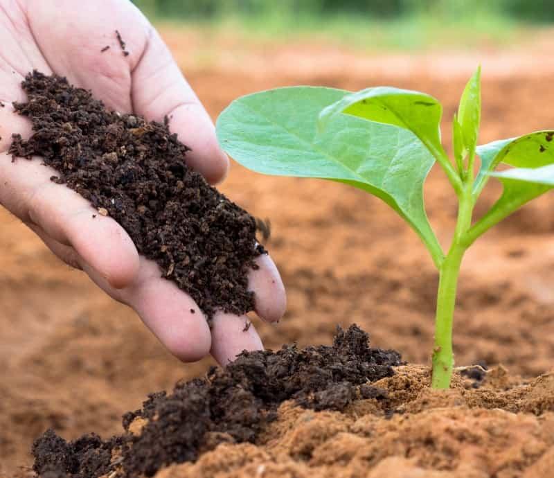 plant organic fertilizer