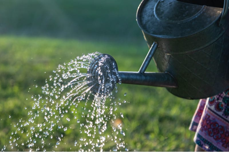 plant watering requirement