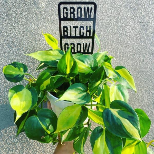 Grow Bitch Grow Plant Trellis, Plantly