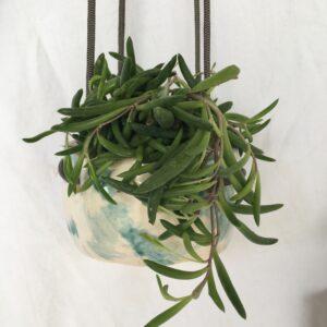 hanging pot wabi sabi style
