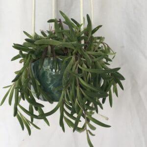 hanging planter wabi sabi