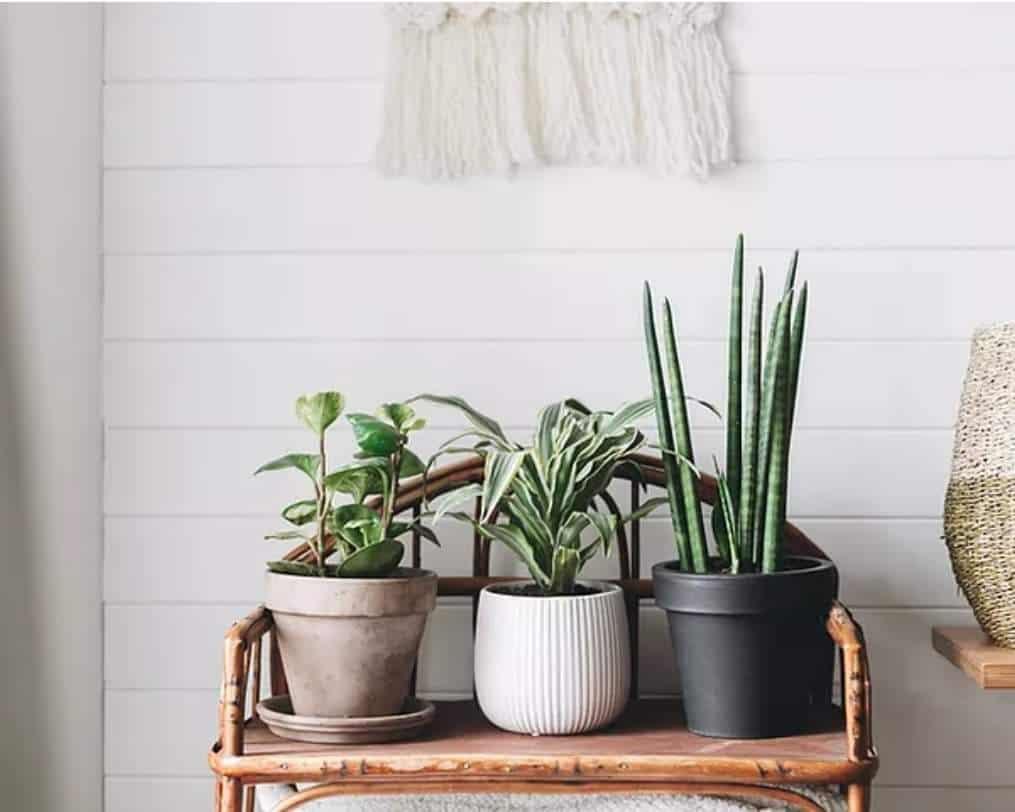 Pot Hedz Plant Shop