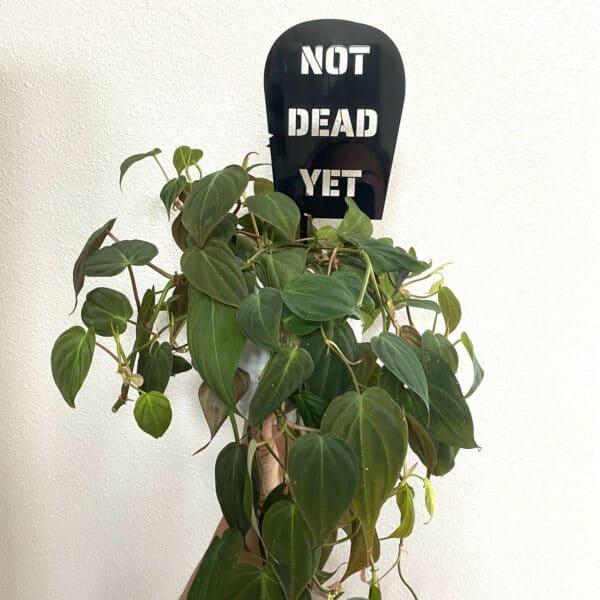 Spooky Plant Trellis, Plantly