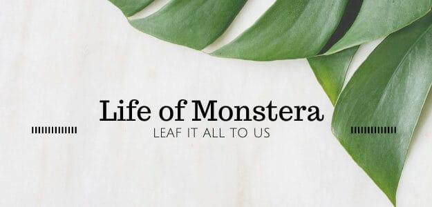 Life of Monstera