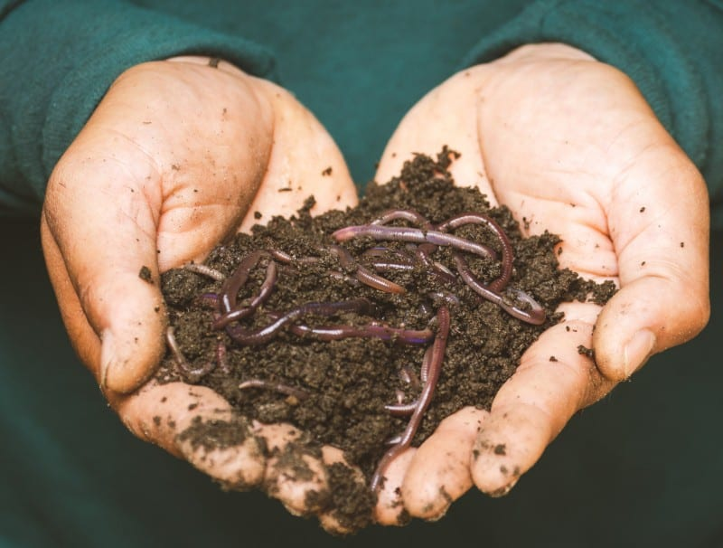 worm casting ( soil requirement )