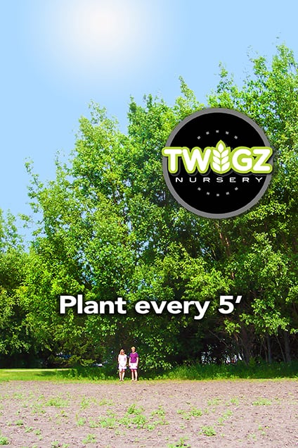 100 Hybrid Willow Austree Cuttings – Easy starts 8-12″, Plantly