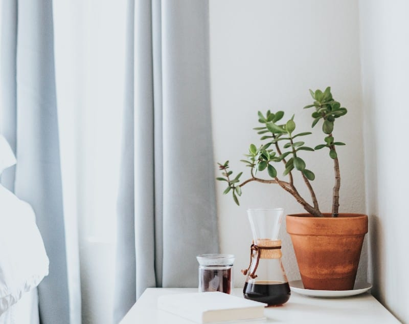 plant lighting requirement
