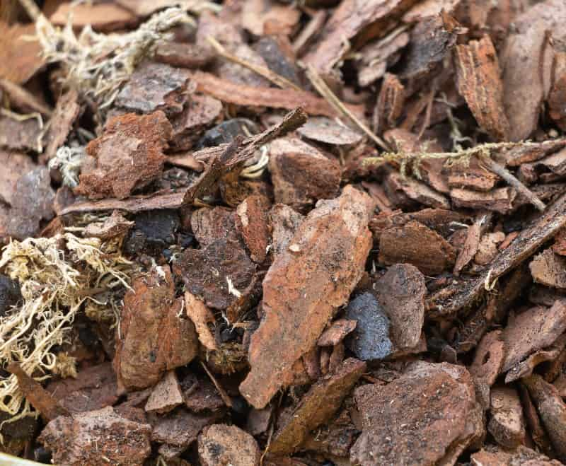 orchid bark ( soil requirement )
