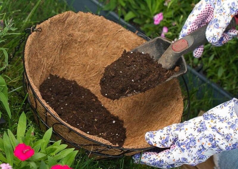plant soil requirement
