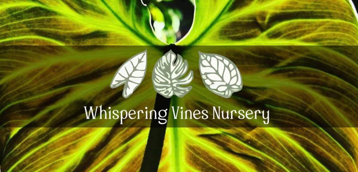 Whispering Vines Nursery