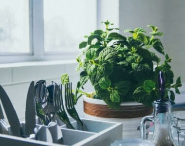 Plants For Your Kitchen to Decorate the Surrounding