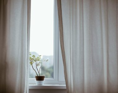 Plants for North Facing Window - What to Grow in North Facing Rooms