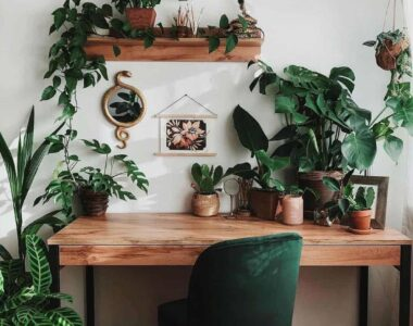5 Plants that Fit Your Modern Home modern home plants
