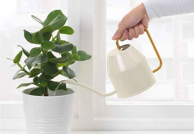 Top Watering of plant