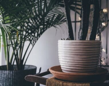 Large Indoor Plants - How to Decorate Every Home with Them