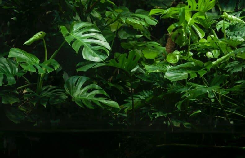 Rare Tropical Plants
