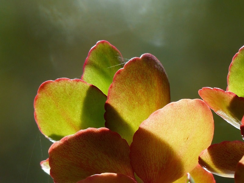 Signs That Your Plant Needs More Light