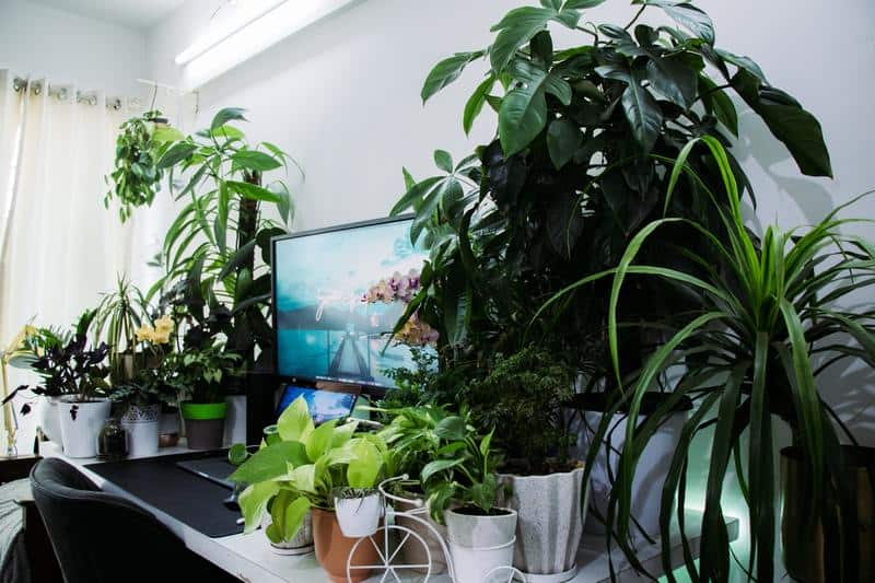 Taking Care of Tropical Plants