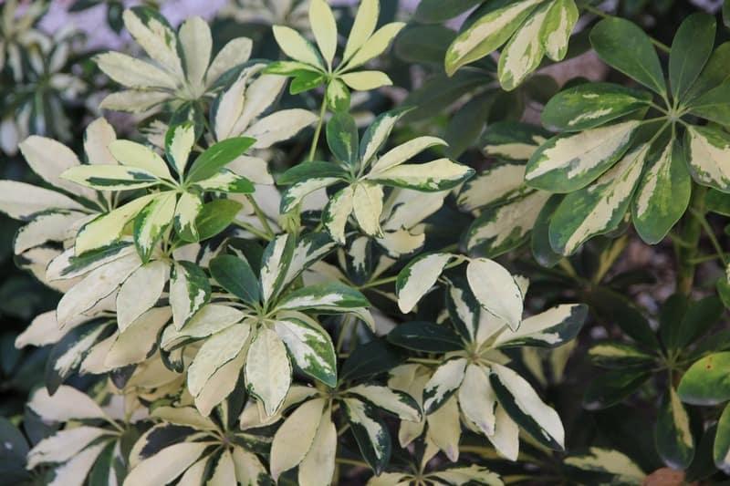 Top 10 Rare Tropical Plants