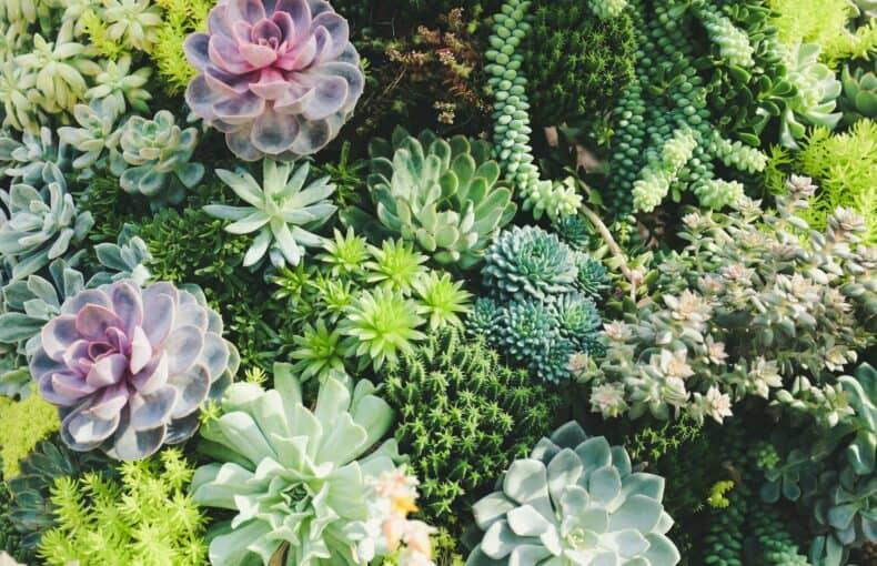 best indoor succulents for your exotic garden