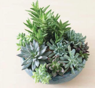 How to Repot Succulents The Easy Way, Plantly