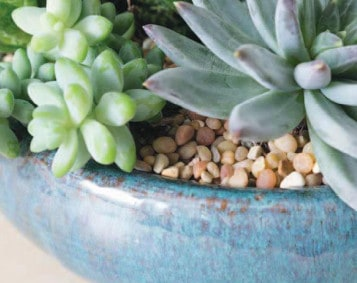 Repoting succulents easily