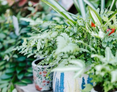 Low-Maintenance Plants That Will Turn Everyone into a Gardener