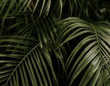Best Palms for Cold Climates You Will Love