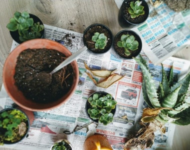 How to Repot Succulents The Easy Way