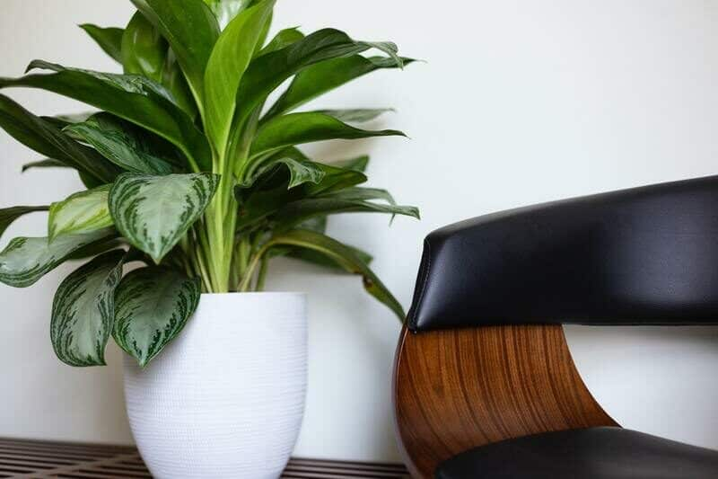 How to Prepare Your Plants for Transportation