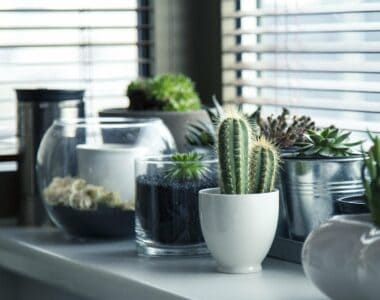 how to move plants to your new home safely
