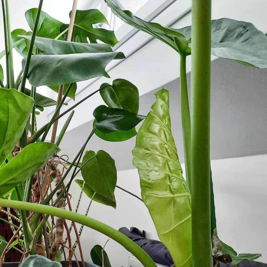 3 Most Expensive Plants to Sell That will Take Your Breath Away