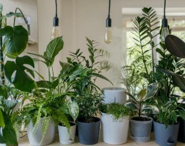 How to Sell Plants Online – All You Need to Know to Get Started