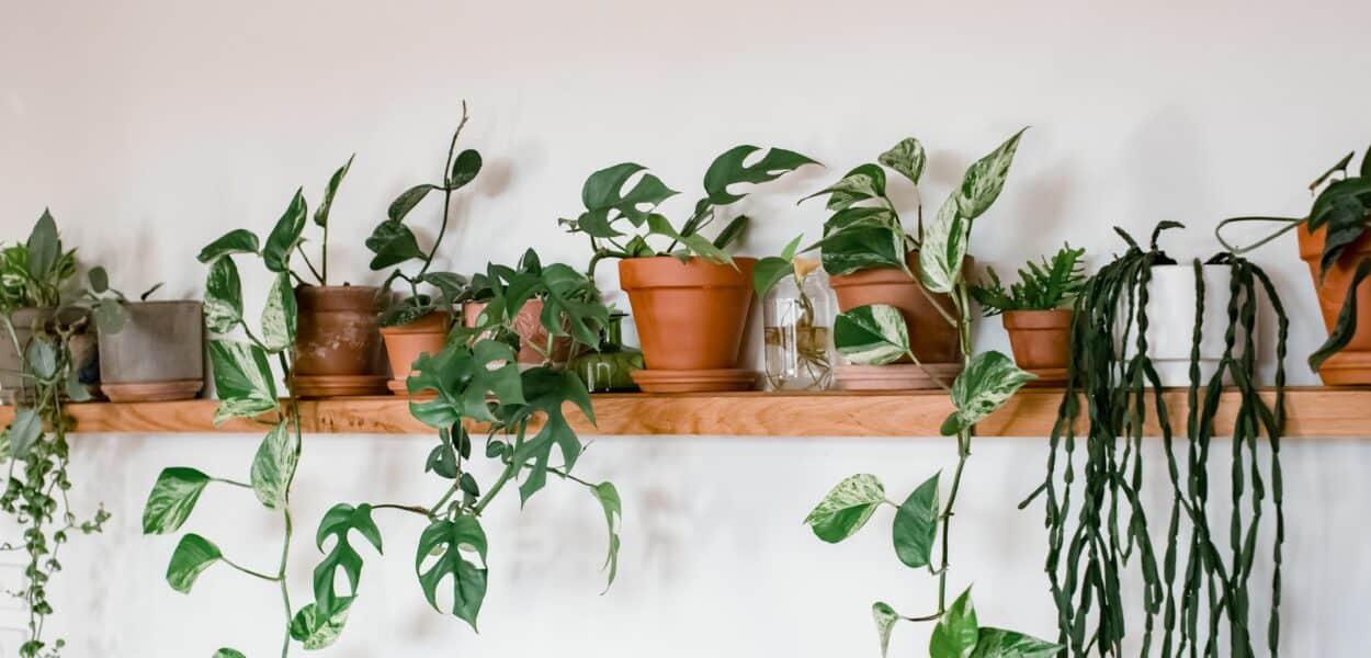 Gardengineering