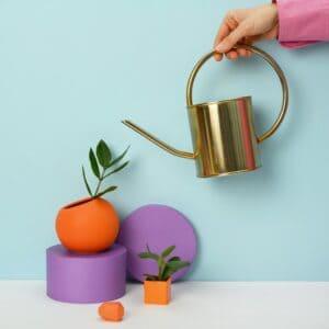 Plant Accessories & Crafts