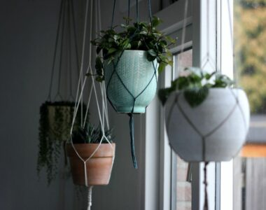 Best Plants for Macramé Plant Hanger